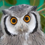 Owl1990